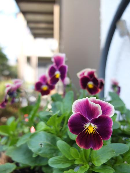11.11.20_X10で花の撮影4