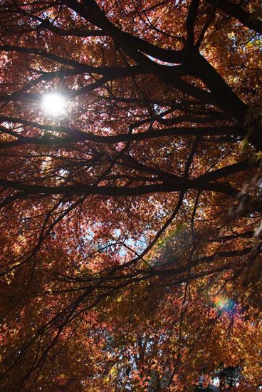 11.12.11_花島公園1