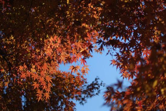 11.12.11_花島公園4