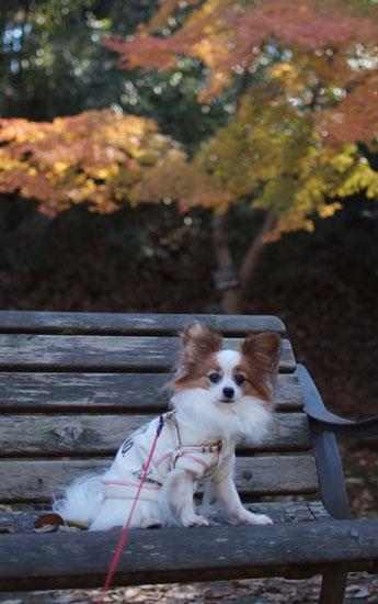 11.12.11_花島公園5
