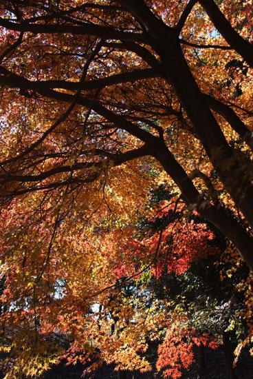 11.12.11_花島公園12