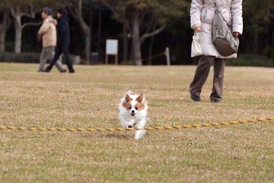 12.1.3_幕張海浜公園1
