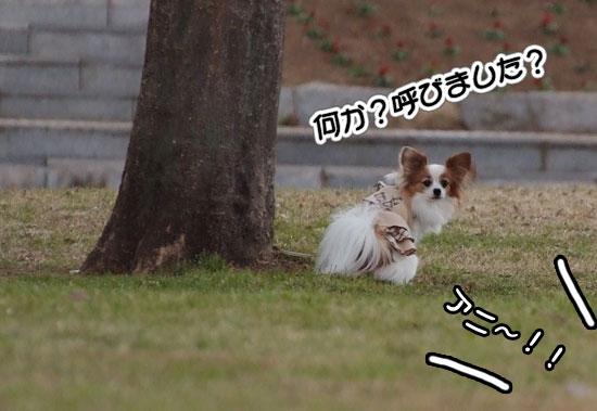 12.1.3_幕張海浜公園3