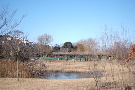 12.1.29_実籾本郷公園1