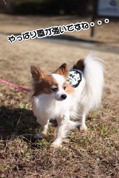 12.1.29_実籾本郷公園6