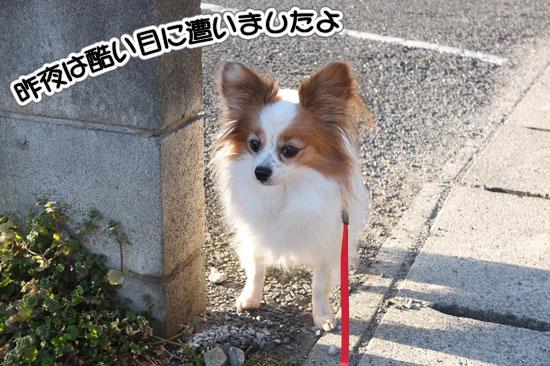 12.2.4_お風呂とお散歩1