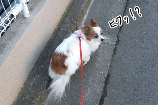 12.2.4_お風呂とお散歩2