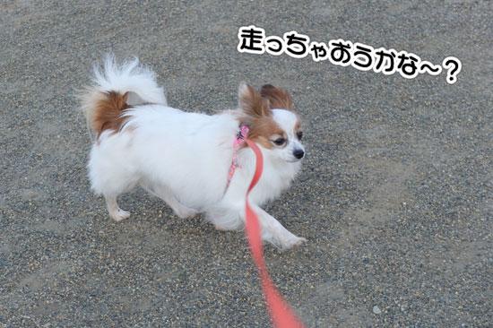 12.2.4_お風呂とお散歩4
