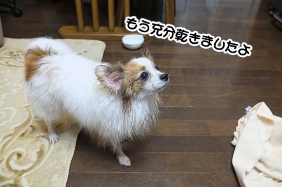 12.2.4_お風呂とお散歩8