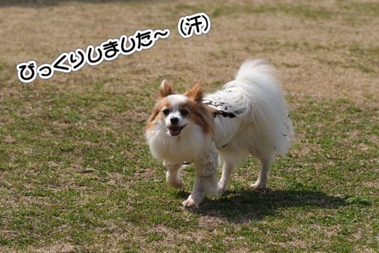 12.3.20_青葉の森1-8