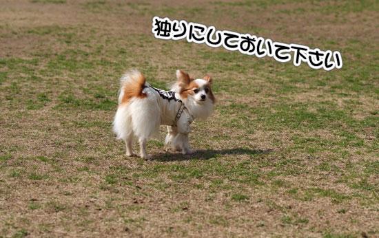 12.3.20_青葉の森2-10