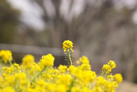 12.3.20_青葉の森2-15