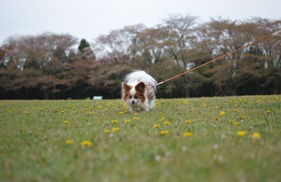 12.4.21_泉自然公園10