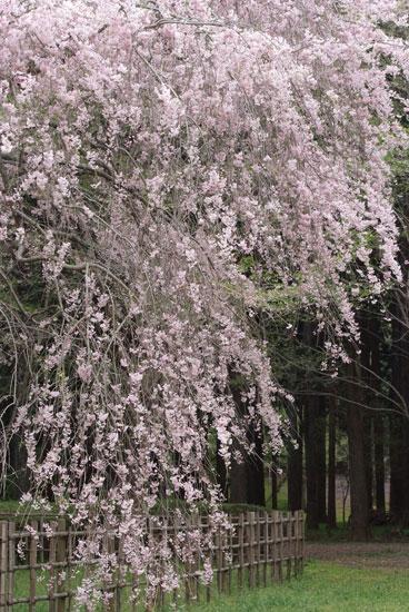 12.4.21_泉自然公園17