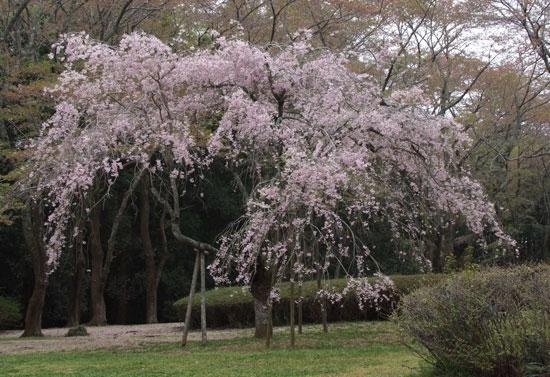 12.4.21_泉自然公園20