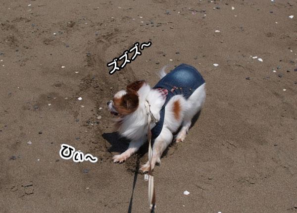 12.5.5_稲毛海浜公園8