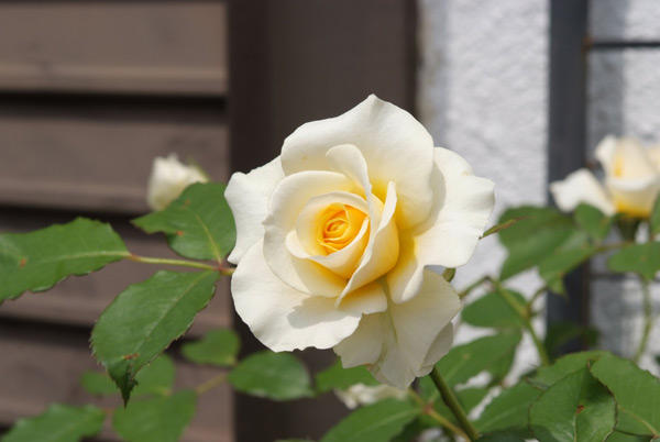2012-春_和音3