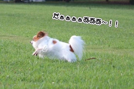12.8.15_幕張海浜公園2