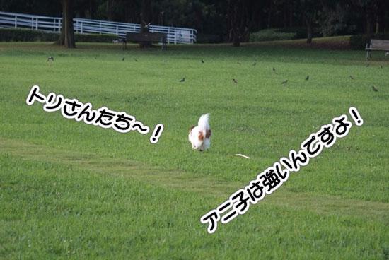 12.8.15_幕張海浜公園3