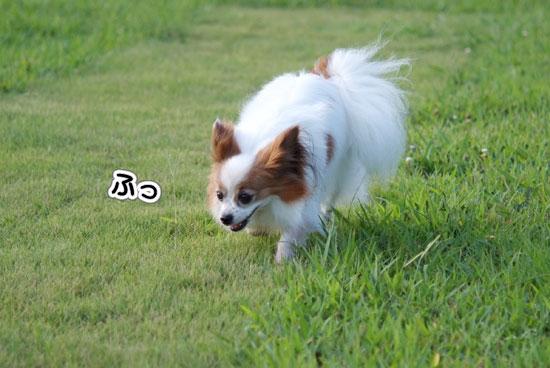12.8.15_幕張海浜公園4