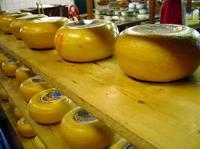 チーズ工房2