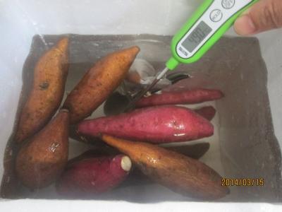 サツマイモ・温浴・芽出し