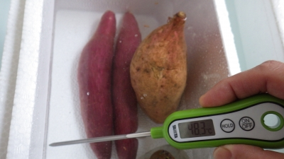150228サツマイモ温浴消毒