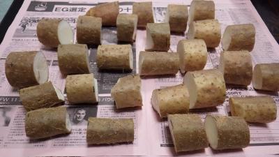 150419長芋の切断・種イモ