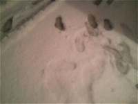 事務所前の雪