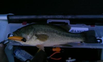 バス川魚珍様09−06