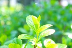 新芽 緑 太陽 AC