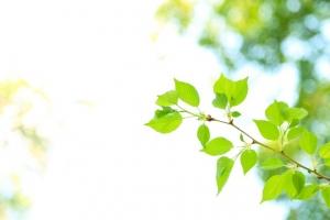 新緑 木漏れ日 枝 AC