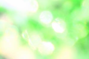 緑 光 きらきら