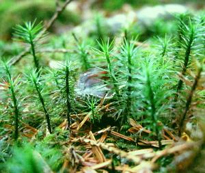 森の小さな緑