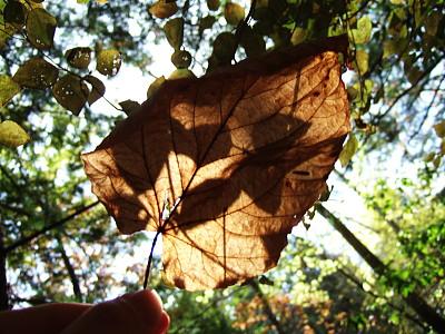 落ち葉に影