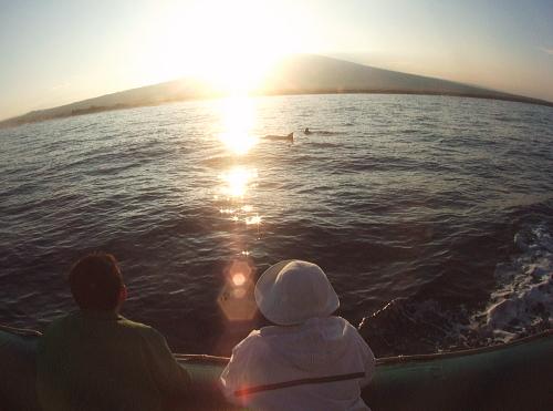 朝日とイルカ