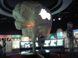20050813 上越科学館 脳髄