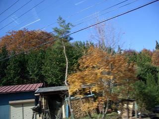 20051112 紅葉