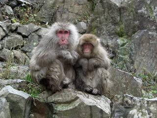 20051112 地獄谷野猿公苑 親子猿