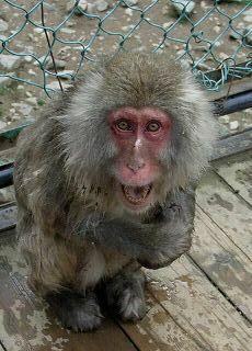 20051112 地獄谷野猿公苑 片手猿