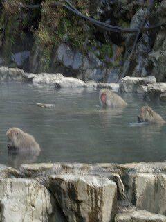 20051112 地獄谷野猿公苑 風呂で猿