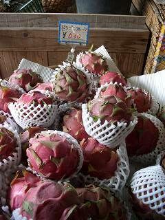 20051210 熱帯フルーツ園 ドラゴンフルーツ