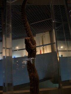 20051210 ハブ博物公園 ハブを飲み込むハブ