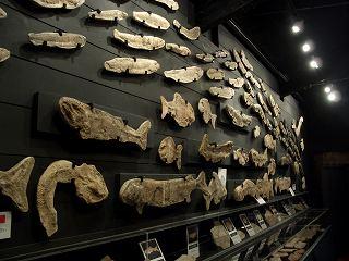 20051210 化石水族館 夢可視館 化石