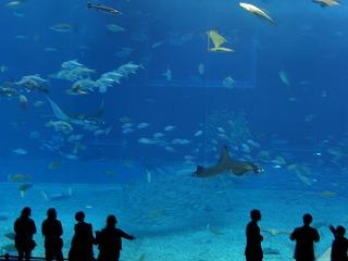 20051212 美ら海水族館  水槽