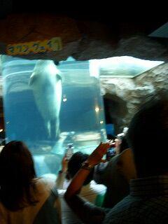 20060724 旭山動物園 マリン