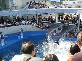 20061009 うみたまご イルカ