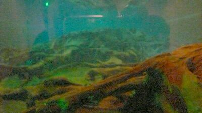 20070430 埋没林博物館 埋没林