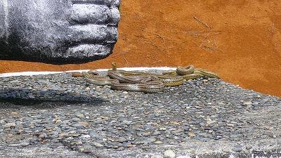 20070501 ハニベ岩窟院 ヘビ