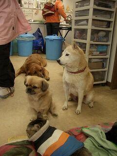 20061208 ムツゴロウ王国 老犬ホーム